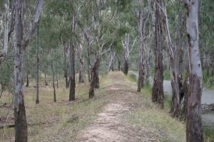 Bush paddock